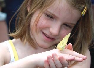 Krohn Conservatory ButterflyShow